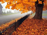 Как справиться с осенней «хандрой»