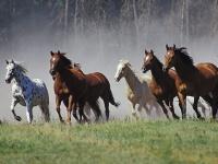 Trīs zirgu tipi